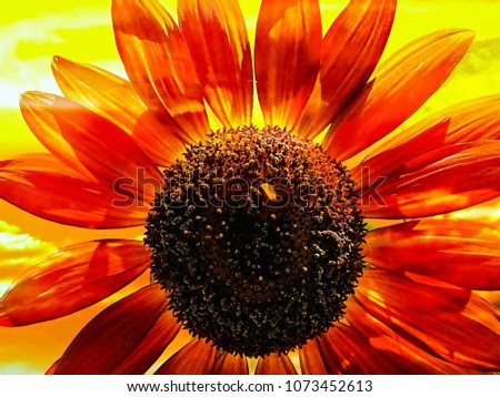 Red Sunflower On Bright Yellow Background #1073452613