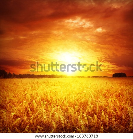 Red sunset over wheat field.  #183760718