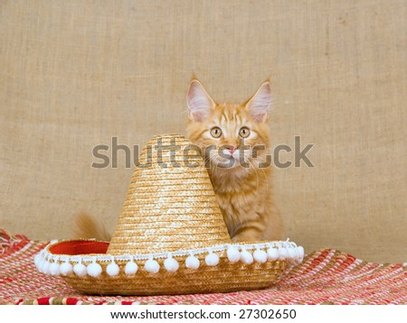 Red tabby Maine Coon kitten with sombrero hat and red woven carpet on hessian burlap background