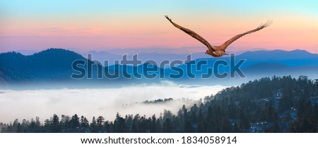 Red-tailed Hawk flying over the blue mountains with sunset sky Сток-фото ©