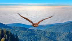 Red-tailed Hawk flying over the mountains and clouds with sky background