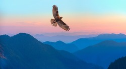 Red-tailed Hawk flying over the mountains with sky background