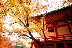Red temple and Red maple trees in Kyoto (Japan)