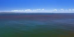 Red tide blooms in sea water blue sky