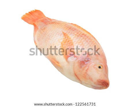 Red tilapia isolated on white background