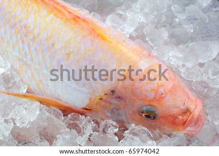 Red tilapia on iced.