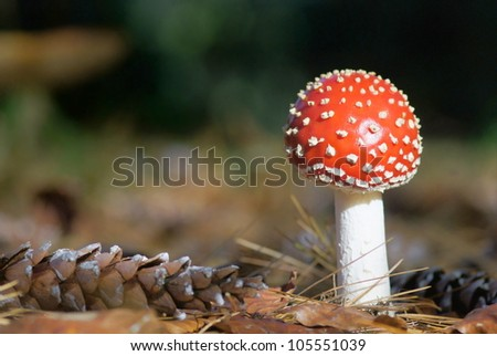 red toadstool in the forest