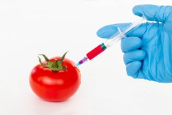 Red tomato and syringe with nitrates isolated on a white background. Pesticides and nitrates are injected by a scientific worker into a red tomato with a syringe. GMO food ingredient concept