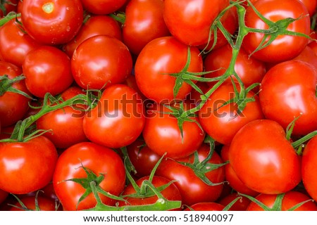 red tomatoes background. Group of tomatoes #518940097