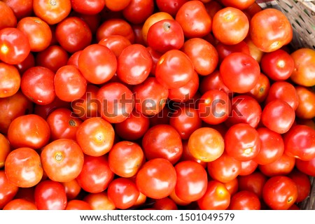 red tomatoes background. Healthy natural food, background. red tomatoes background. Group of tomatoes. Organic Tomatoes #1501049579