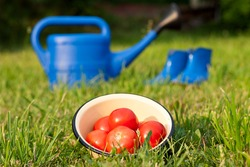 Red tomatoes. Watering can and rubber boots. Garden tools on a green lawn.