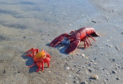 Red toy lobster and crab on a sandy beach, close-up. Baltic sea, Latvia. Childhood, educational toys, science, biology concepts