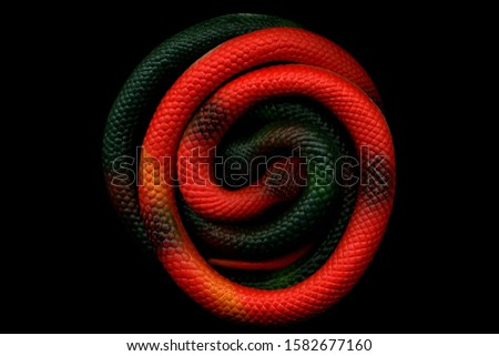 Red toy rubber snake rolled up in a ball. Colored toy snake. Rubber snake. toy snake