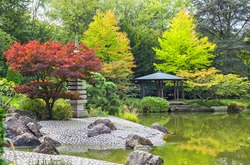 Red tree near the green pond in Japanese garden in Bonn, Germany