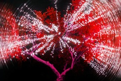 Red tree with a garland of warm lights. Street lighting in the trees. It looks like a firework explosion inside a tree.