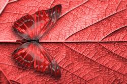 red tropical butterflies. moths for design