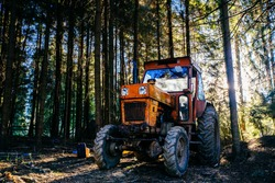 Red truck vehicle used for illegal logging hidden in a forest in morning lights.