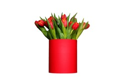 Red Tulip bouquet in red box isolated isolated on white