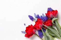 Red tulips and blue muscaries flowers  on  white textured  background. Floral still life.  Selective focus. Place for text. Top view.