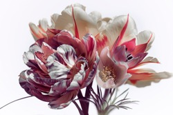 red tulips and spring flowers on a white background, bouquet.