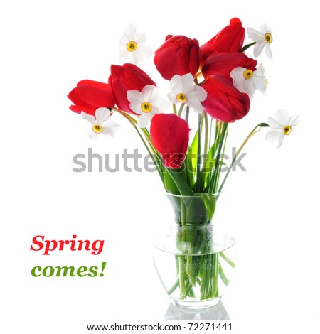 Red tulips and white narcissuses in vase isolated.