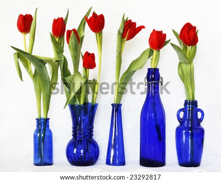 red tulips in blue glass bottles on white lace background