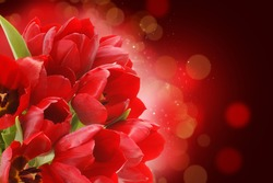 Red tulips on a starry bokeh light background