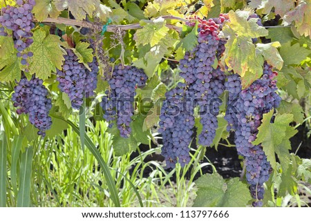 californian wine clusters California wine cluster case study solution, california wine cluster case study analysis, subjects covered competition economic development industry analysis location.