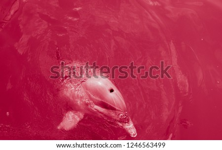 Red view of the dolphin in the water #1246563499