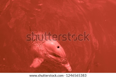 Red view of the dolphin in the water #1246565383