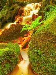 Red waterfall Sucha Kamenice in the Czech-Saxony Switzerland. Red ferric sediments on big boulders between green ferns.