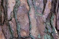 red weathered bark material, rough structure