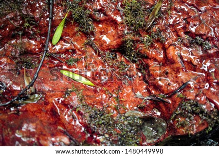Red wet glossy stone on which water flows from the stream #1480449998