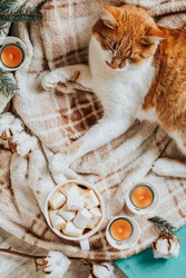 Red white cat on plaid, cup of coffee, spruce branches, gift, candles. Christmas and New Year, autumn winter beautiful background, cozy home concept, copy space.
