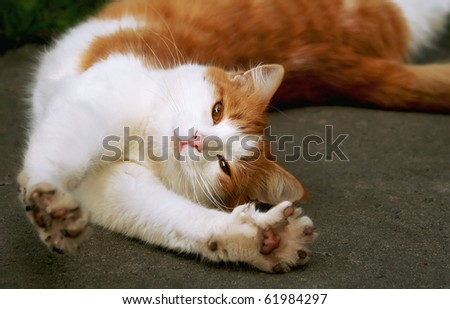 red - white cat stretches on gray asphalt