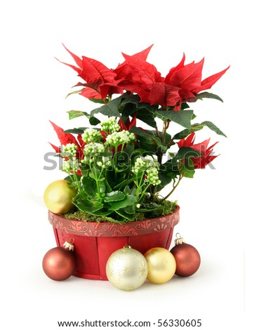 Red white Christmas flower decoration arrangement in pot
