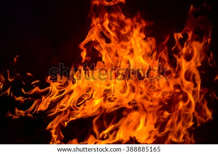 red wild fire on black background #388885165