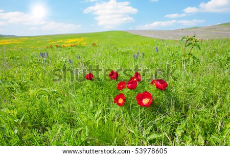 red wild flowers - stock photo
