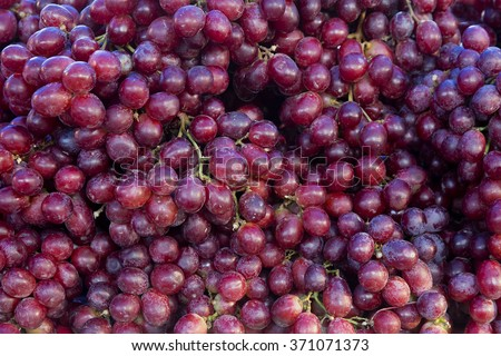 Red wine grapes background/ dark grapes, blue grapes , Red Grape , Vitis vinifera L. , VITACEAE , Cardinal Grape , Emperor Grape