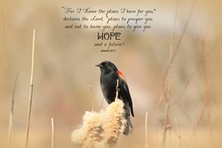 Red Winged Blackbird perched on cattails with a Bible Verse from Jeremiah