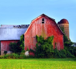 Red wooden barn has collapsing tin roof and silo.  Paint is faded and peeling from exterior of barn and vines grow up its' side.