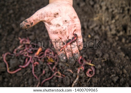 red worm in hand on a background of a pile of worms
