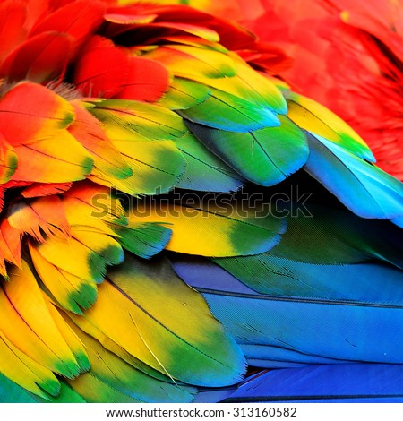 Shutterstock Red Yellow and Blue feathers of Scarlet Macaw bird with beautiful colors profile