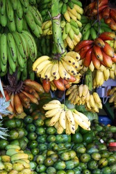 Red, yellow and green bananas hanging for sale at a market, Kandy, Sri Lanka