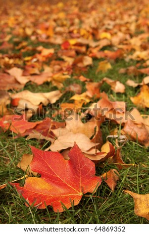 red yellow orange fallen leaves in autumn