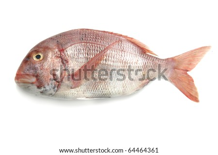 redband sea bream