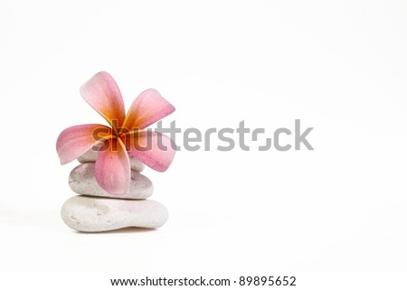 Reddish pink frangipani flower on white rock isolated on white for spa concept