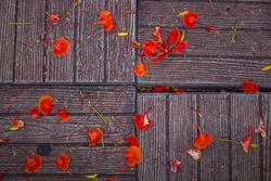 Redflowers and dry leaf fall on the Pattern floor