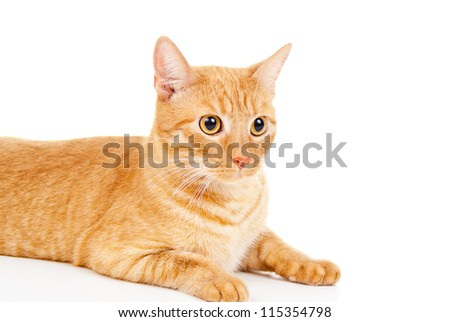 redhead cat looking isolated