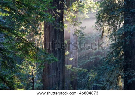 Redwood National Park in California, USA - stock photo